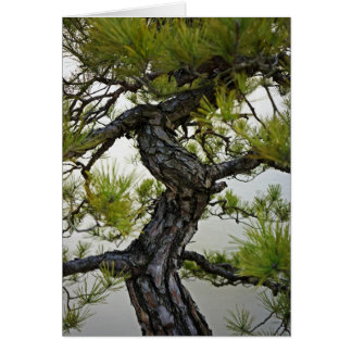 Japanese Red Pine Bonsai Tree Greeting Card