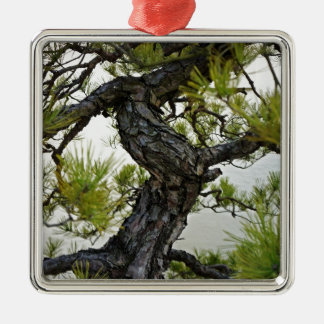 Japanese Red Pine Bonsai Tree Silver-Colored Square Decoration