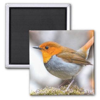 Japanese Robin Bird Magnet