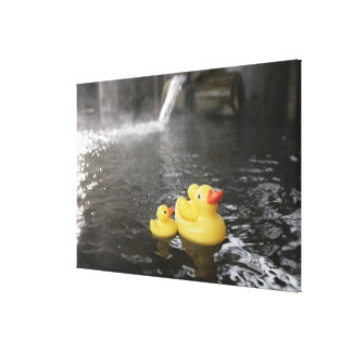 Japanese Rubber Duckies Canvas Print
