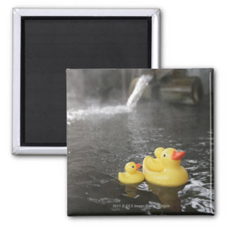 Japanese Rubber Duckies Magnet