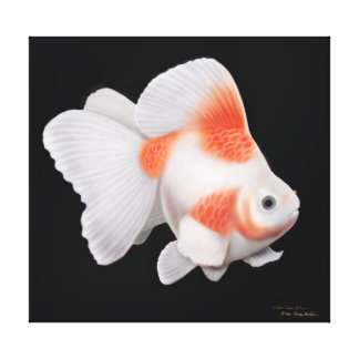 Japanese Ryukin Fantail Goldfish Wrapped Canvas Stretched Canvas Prints