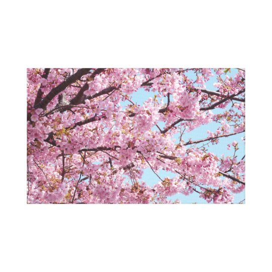 Japanese Sakura. Cherry Blossoms. Canvas Print