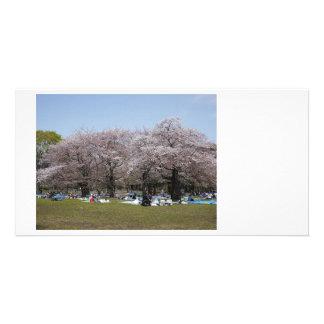 Japanese Sakura Custom Photo Card
