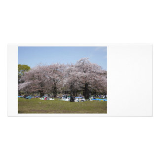 Japanese Sakura Photo Cards