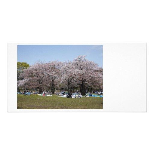 Japanese Sakura Photo Cards