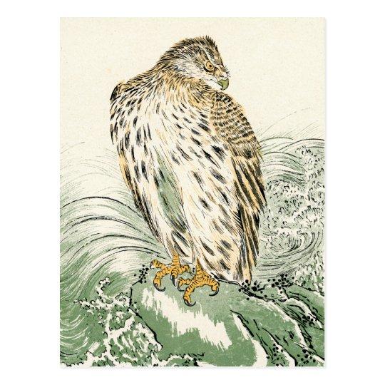 Japanese Sea Eagle - Osprey Postcard