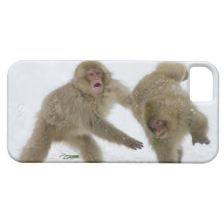 Japanese Snow Monkey cubs playing on snow Barely There iPhone 5 Case