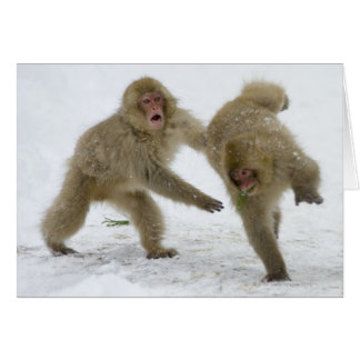 Japanese Snow Monkey cubs playing on snow Card
