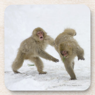 Japanese Snow Monkey cubs playing on snow Coaster