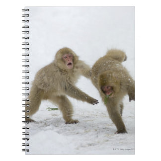 Japanese Snow Monkey cubs playing on snow Notebooks