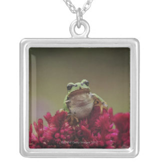 Japanese tree frog (Hyla japonica) on flowers, Silver Plated Necklace