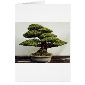 Japanese White Pine Bonsai Tree Greeting Card