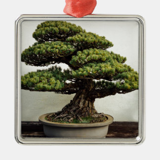 Japanese White Pine Bonsai Tree Silver-Colored Square Decoration