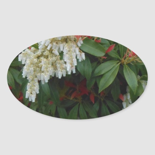 Japonica Oval Stickers