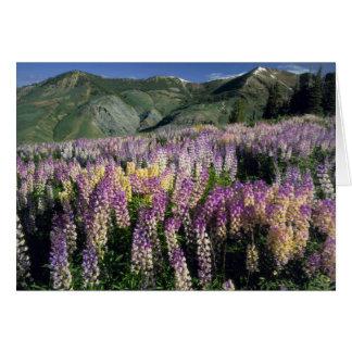 JARBIDGE WILDERNESS, NEVADA. USA. Spur lupine Card
