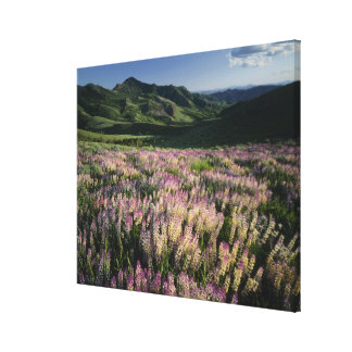 Jarbridge Wilderness and Mountains, Nevada, Spur Stretched Canvas Print