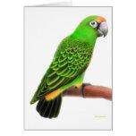 Jardines Parrot Greeting Card