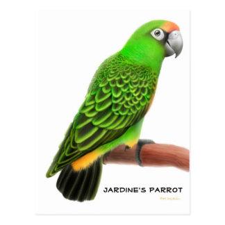 Jardines Parrot Postcard