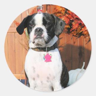Jarno - Boston Terrier Mix Breed Photo-2 Round Sticker