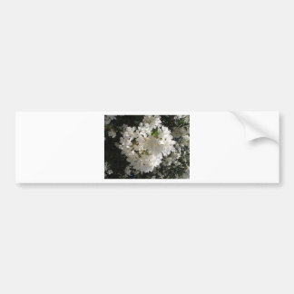 Jasmine Blossom. Bumper Stickers
