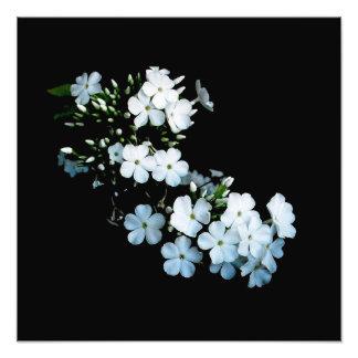 Jasmine Detail Photographic Print