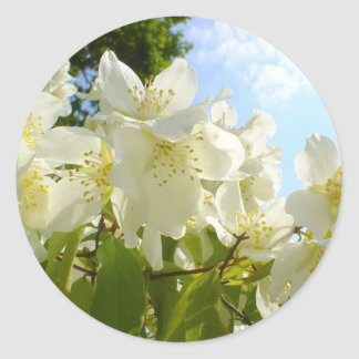 Jasmine Flowers Classic Round Sticker