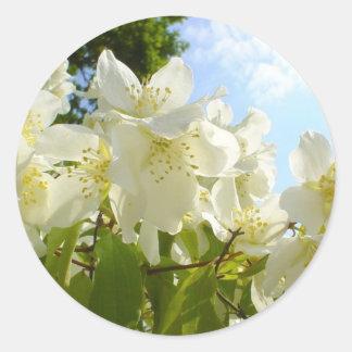 Jasmine Flowers Round Sticker