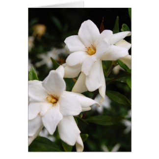 Jasmine Greeting card