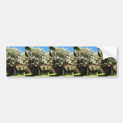 Jasmine Tree In Bloom Bumper Stickers