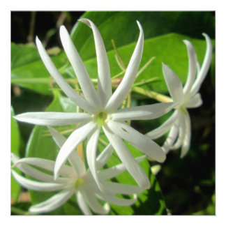 Jasmine White Green Flower Personalized Announcement