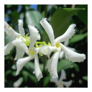 Jasmine White Tubes Flower Custom Announcement