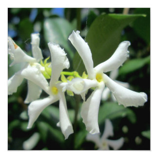 Jasmine White Tubes Flower 5.25x5.25 Square Paper Invitation Card