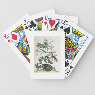 Jasmine: with snake, moth, caterpiller and chrysal bicycle playing cards