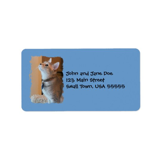Jasper Kitten Photo Blue Address Labels