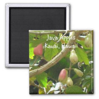 Java Apples Square Magnet