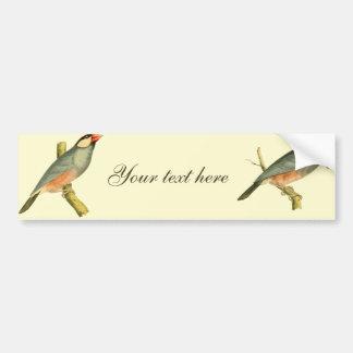 Java Sparrow, Bumper Sticker