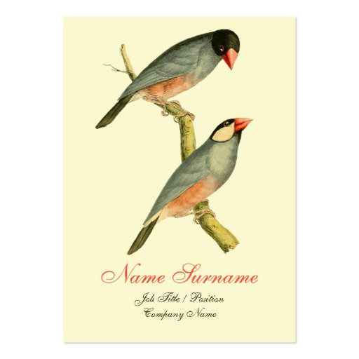 Java Sparrow, Business Card Template