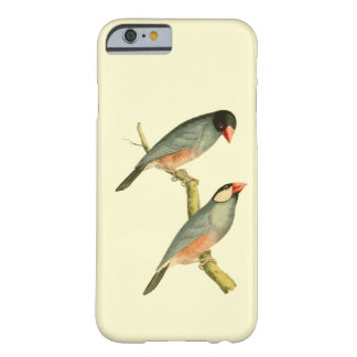 Java Sparrow, Barely There iPhone 6 Case