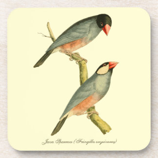 Java Sparrow Coaster