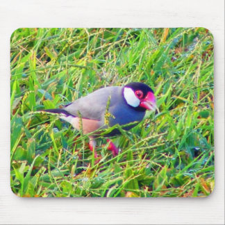 Java Sparrow in the grass in Hawaii Mouse Pads
