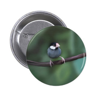 Java Sparrows Buttons