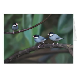 Java Sparrows Cards