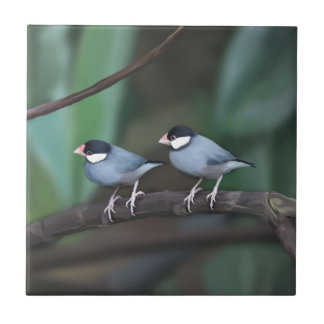 Java Sparrows Ceramic Tile