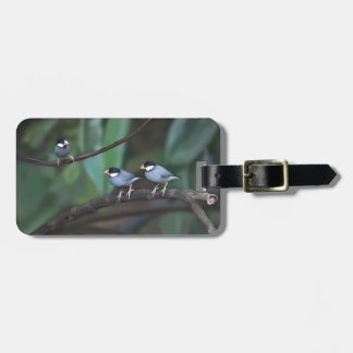 Java Sparrows Tag For Bags