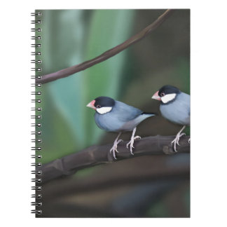 Java Sparrows Spiral Note Books