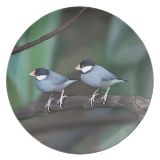 Java Sparrows Party Plates