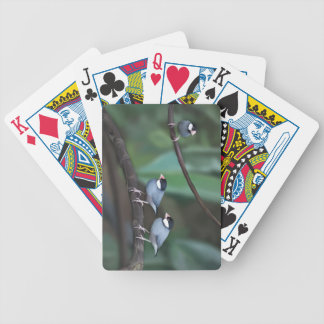Java Sparrows Bicycle Poker Cards