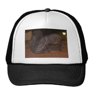 Javalina piggies mesh hat
