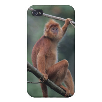 Javan black leaf monkey (Trachypithecus auratus) iPhone 4/4S Covers